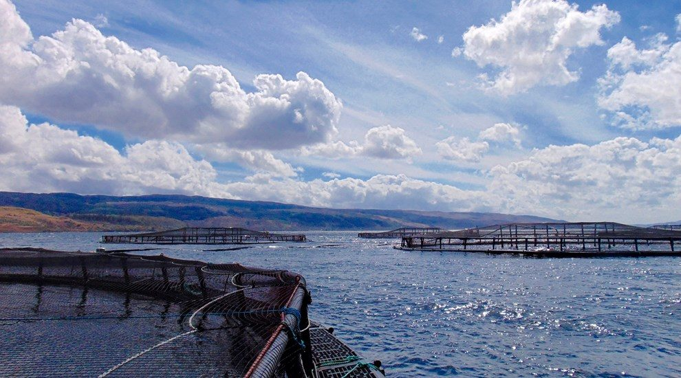 Photo of salmon farming nets in sea