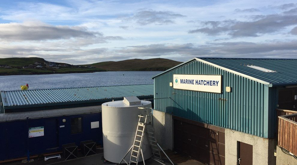 Photo of building by sea with Marine Hatchery logo