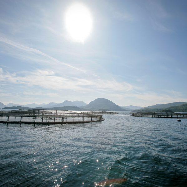 Salmon farms at sea