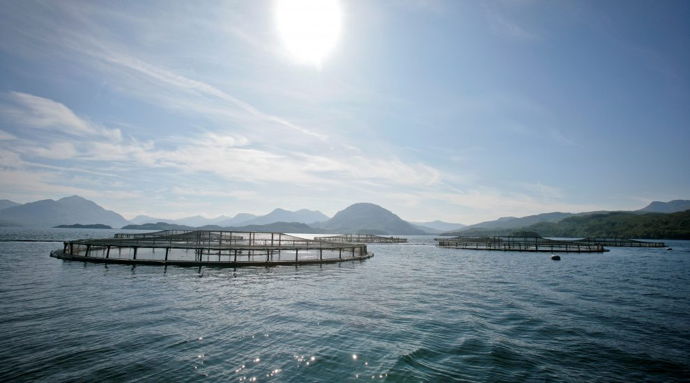 Salmon farms at sea